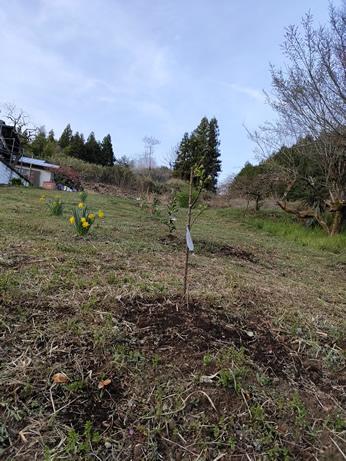 梅鉢工房果樹園